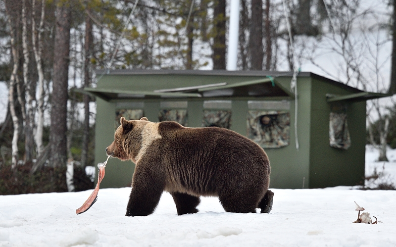 Boreal Wildlife Center Viiksimo