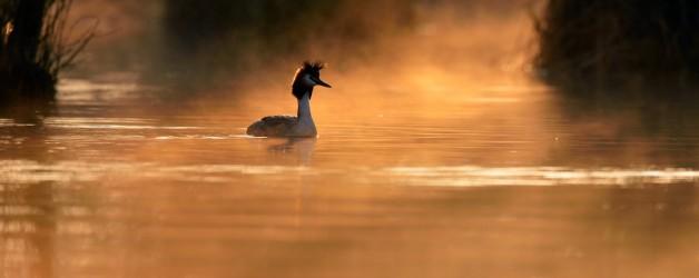Le Petit Prince du Lac